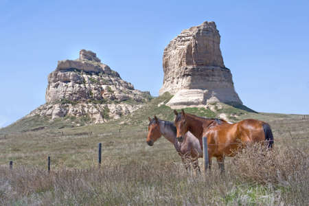 2 horses in a field near mountains and rocky outcrops