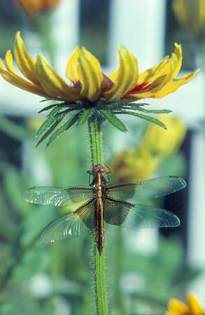 dragonfly on a flower Stock Photo - 10340368