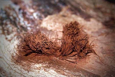 natuurlijke bossen schimmel
