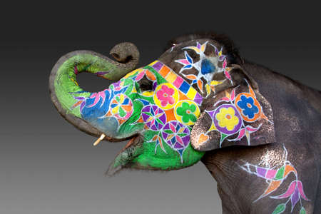an elephant decorated for Holi in Jaipur, India