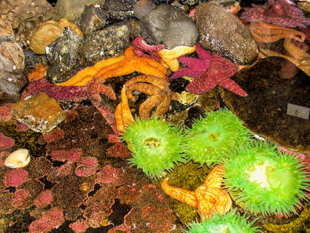 Tropical sea anemones and starfish photo