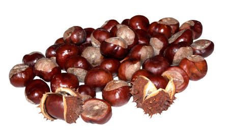 buckeye seed: horse chestnuts with and without husks