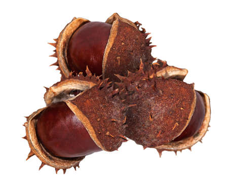 buckeye tree: horse chestnuts with and without husks