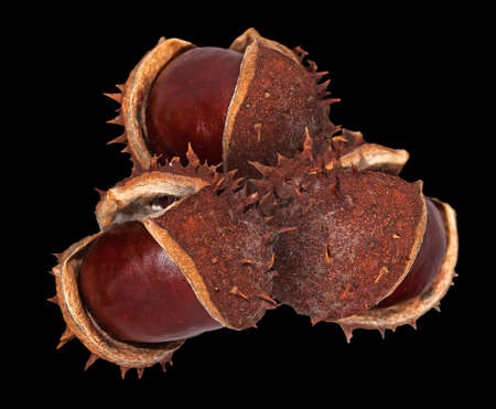 horse chestnuts: horse chestnuts with and without husks