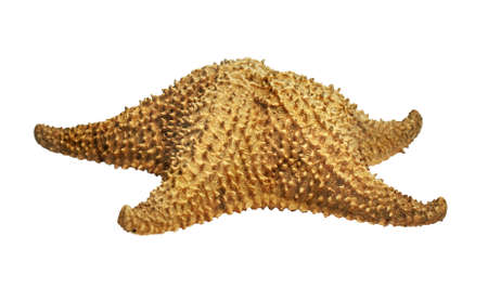 sea star: Side view of a starfish aka sea star