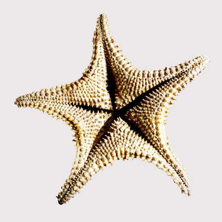 echinoderm: the underside of a starfish aka sea star