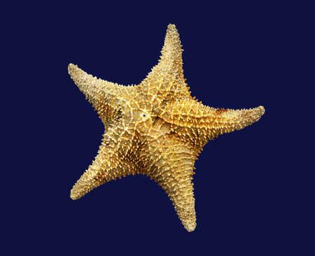 sea star: the topside of a starfish aka sea star