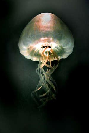 polyp: an unidentified jellyfish
