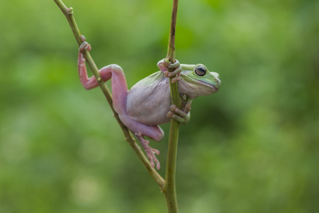 Frogs Green Stockfoto