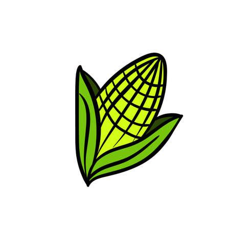 sweetcorn: Corn icon vector Illustration