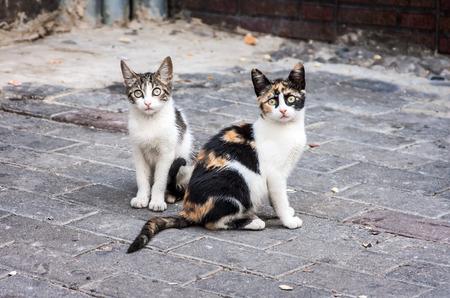 kotów: Koty Zdjęcie Seryjne