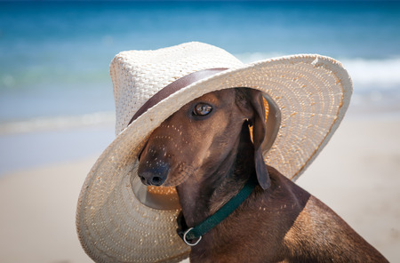 Dog with hat on the beach photo