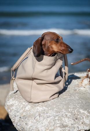 mujer de espaldas: Teckel perro de peluche en una bolsa con la mujer desde atr�s