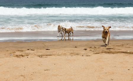 dogs playing: Perros que juegan la playa del Mar Mediterr�neo