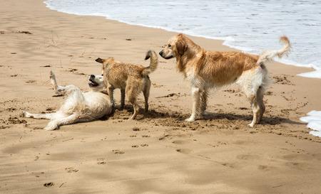 perros jugando: Dogs playing the Mediterranean Sea beach