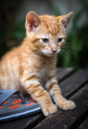 whelp: Beautiful cat cub on wood Stock Photo