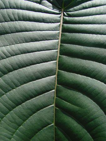 ingest: green leaf macro dark