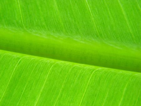 ingest: banana leaf green