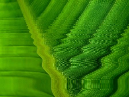 green wave lines photo