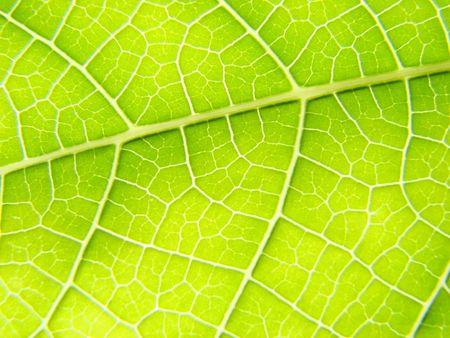 ingest: leaf macro lines