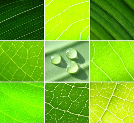 collage green leafs water drops Stock Photo - 3219149