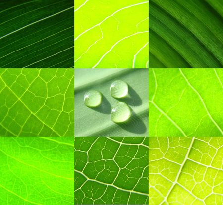else: collage green leafs water drops Stock Photo