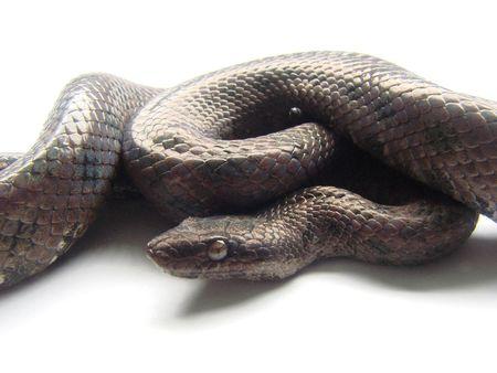 snake macro photo