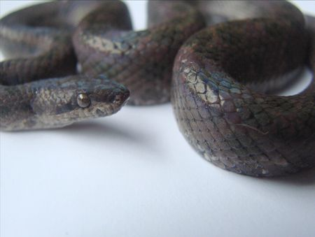 crawler: macro shot black snake Stock Photo