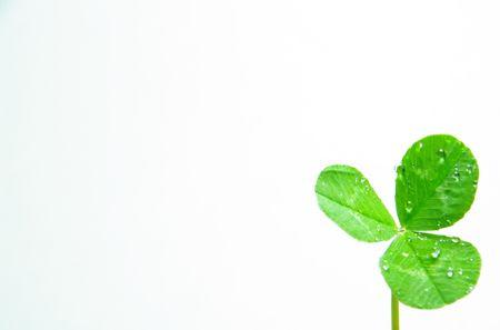 cloverleafes: Macron trifoglio verde su fondo bianco Archivio Fotografico