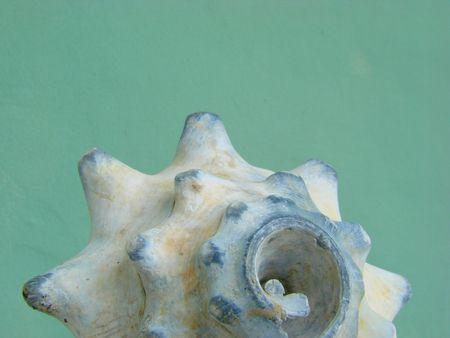 rotund: mussel blue