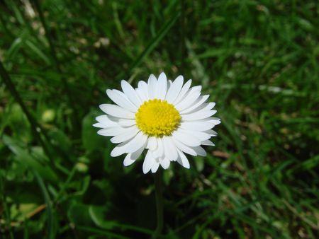 small yellow white flower grass green
