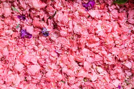 Fresh pink flower petals