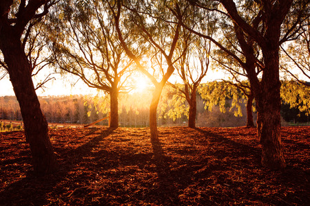 Beautiful golden dry park view in the forest in sunny day, warm yellow sunset light, fall season