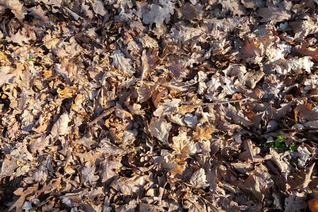 pile of leaves: pile of brown leaves on the ground