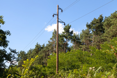 telephone pole: telephone pole in a forest