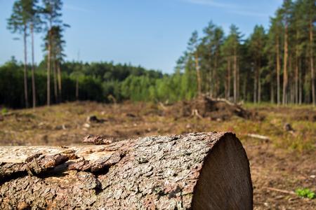 tronco de árbol en un bosque Foto de archivo