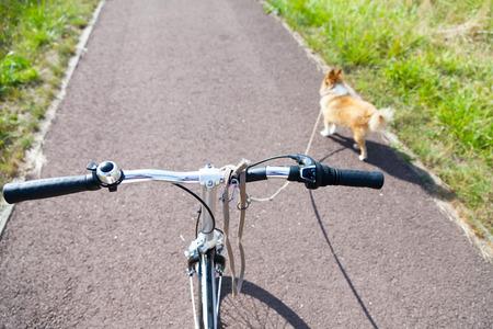 dog with leash on a bike