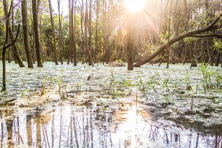 moor: forest in a moor bog Stock Photo
