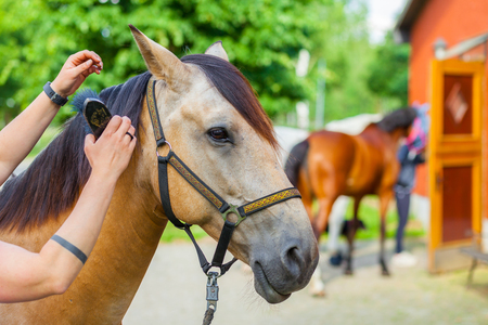 horsewoman cares her brown horse with a brush