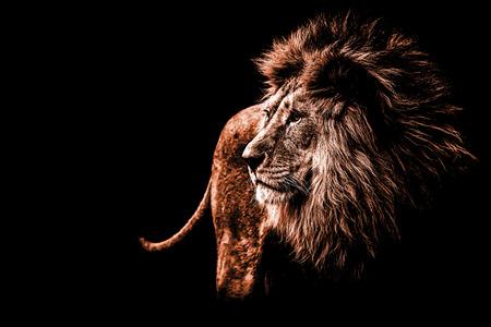 een leeuwportret in donkeroranje kleuren Stockfoto