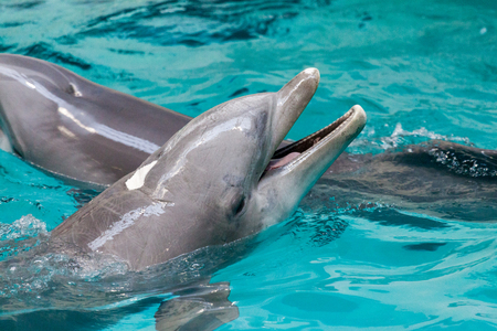 a dolphin swims in a large pool