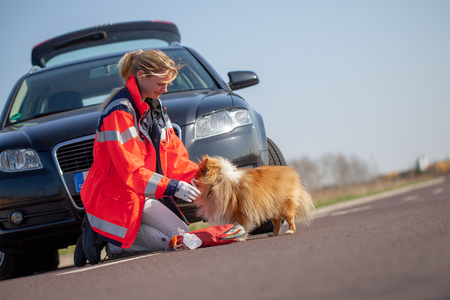 German animal medic treats an injured dog. The german word Rettungsdienst means rescue service.