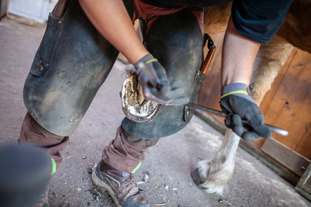 a blacksmith works on a horse hoof Archivio Fotografico