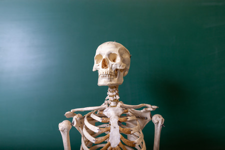 a skeleton model stands at a blackboard