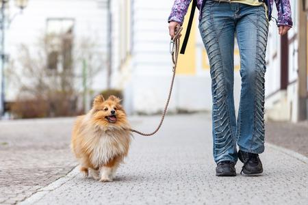 A woman leads her dog on a leash Stok Fotoğraf