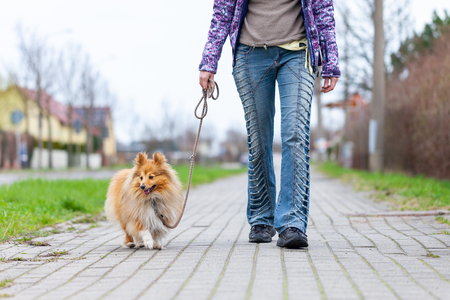 A woman leads her dog on a leash 스톡 콘텐츠