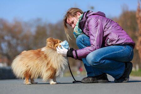 a woman puts a mask on a shetland sheepdog