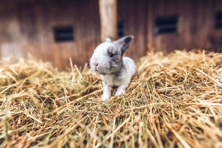 Portrait of a baby rabbit at a farm