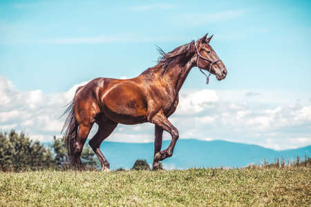 Portrait of a trotting horse in front a beautiful background Stockfoto