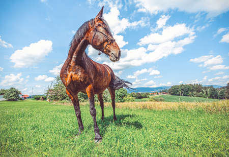 Portrait of a trotting horse in front a beautiful background
